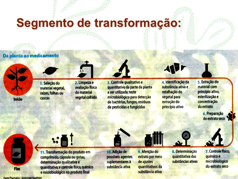 Segmento de transformação: