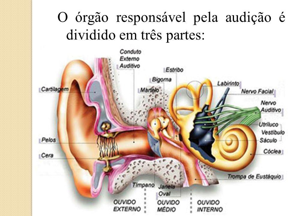 O órgão responsável pela audição é dividido em três partes: