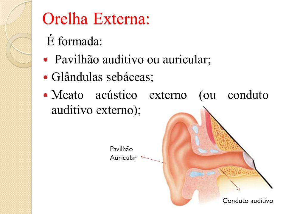 Orelha Externa: É formada: Pavilhão auditivo ou auricular;