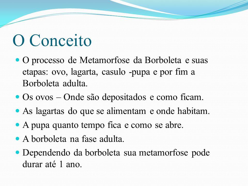 O Conceito O processo de Metamorfose da Borboleta e suas etapas: ovo, lagarta, casulo -pupa e por fim a Borboleta adulta.