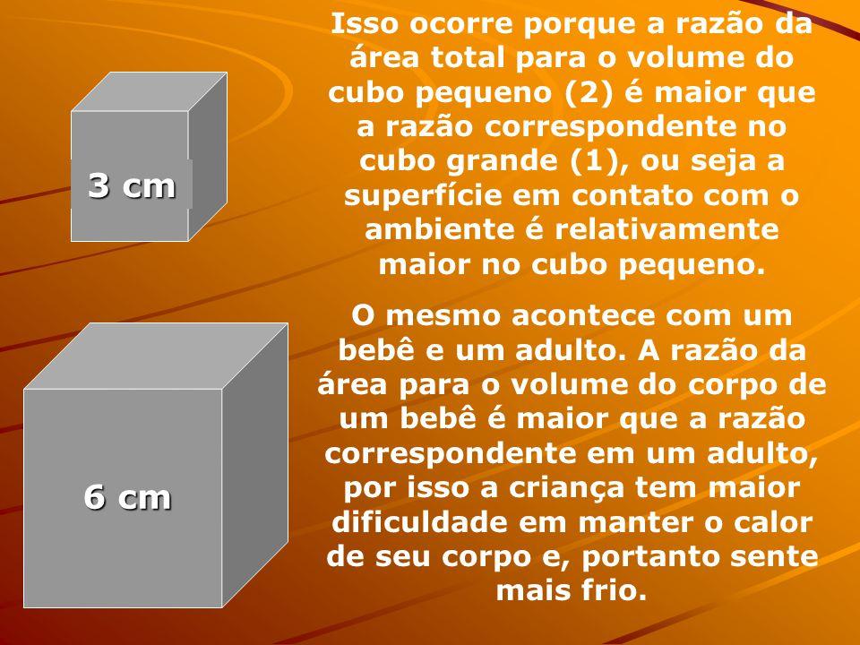 Isso ocorre porque a razão da área total para o volume do cubo pequeno (2) é maior que a razão correspondente no cubo grande (1), ou seja a superfície em contato com o ambiente é relativamente maior no cubo pequeno.