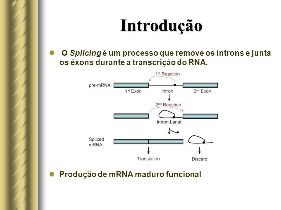 Introdução O Splicing é um processo que remove os íntrons e junta os éxons durante a transcrição do RNA.