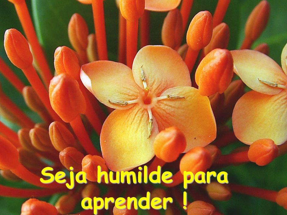 Seja humilde para aprender !