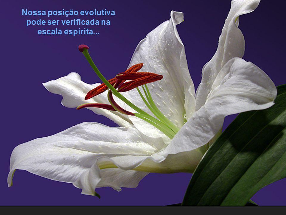 Nossa posição evolutiva pode ser verificada na escala espírita...
