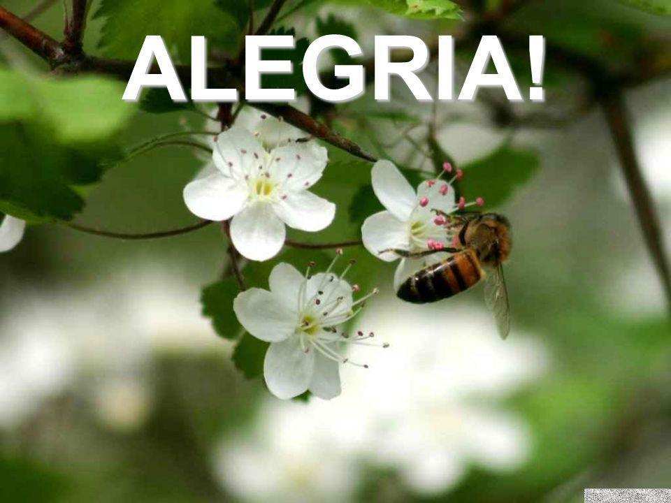 ALEGRIA!