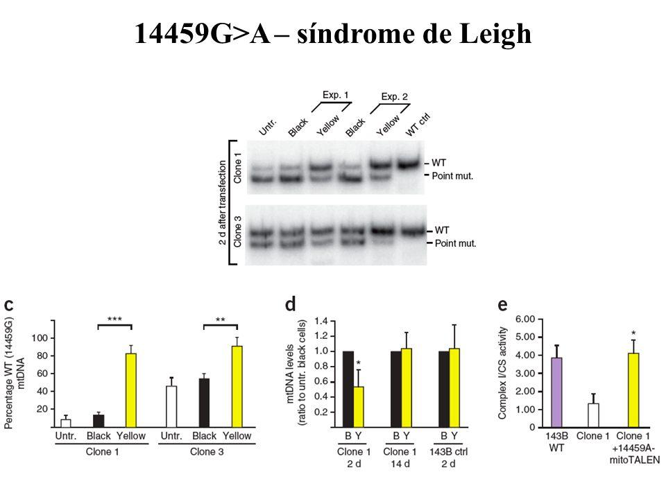 14459G>A – síndrome de Leigh