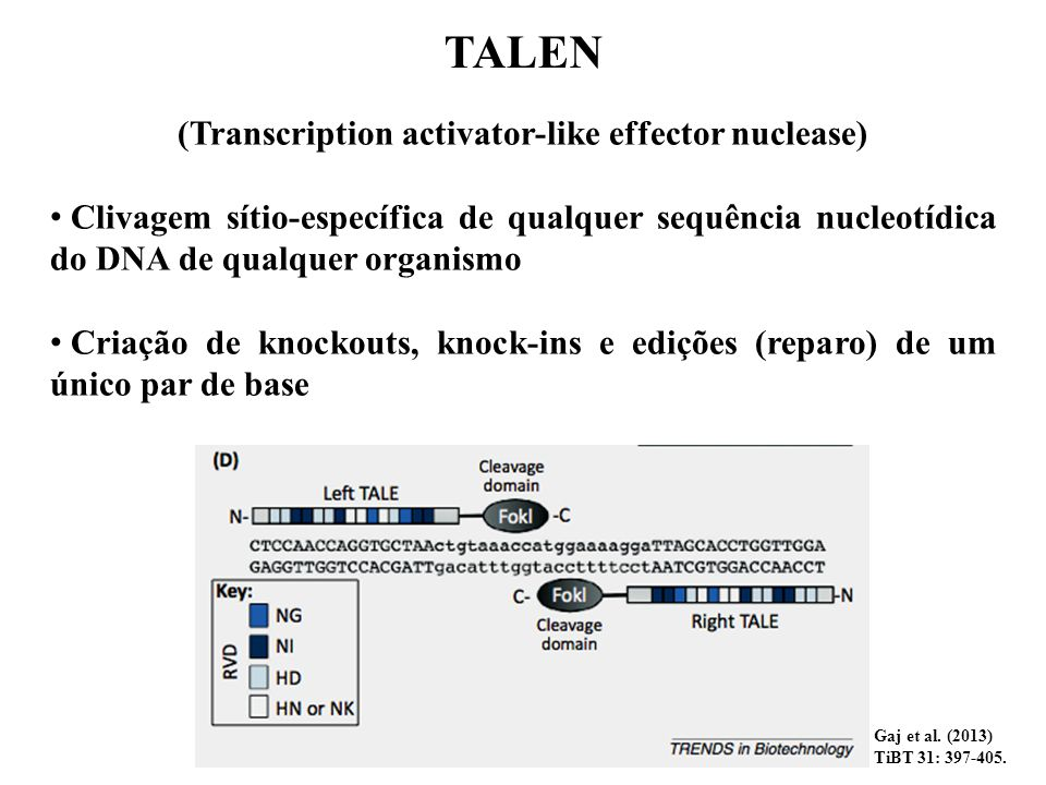 (Transcription activator-like effector nuclease)