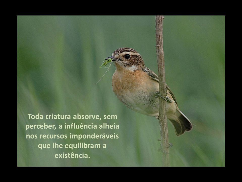 Toda criatura absorve, sem perceber, a influência alheia nos recursos imponderáveis que lhe equilibram a existência.