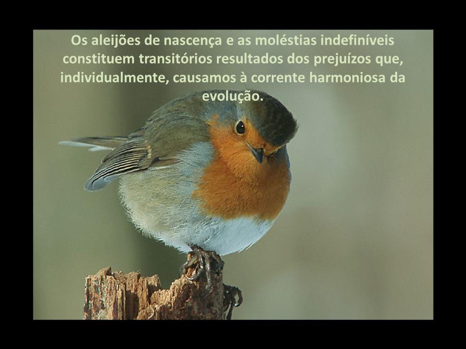 Os aleijões de nascença e as moléstias indefiníveis constituem transitórios resultados dos prejuízos que, individualmente, causamos à corrente harmoniosa da evolução.