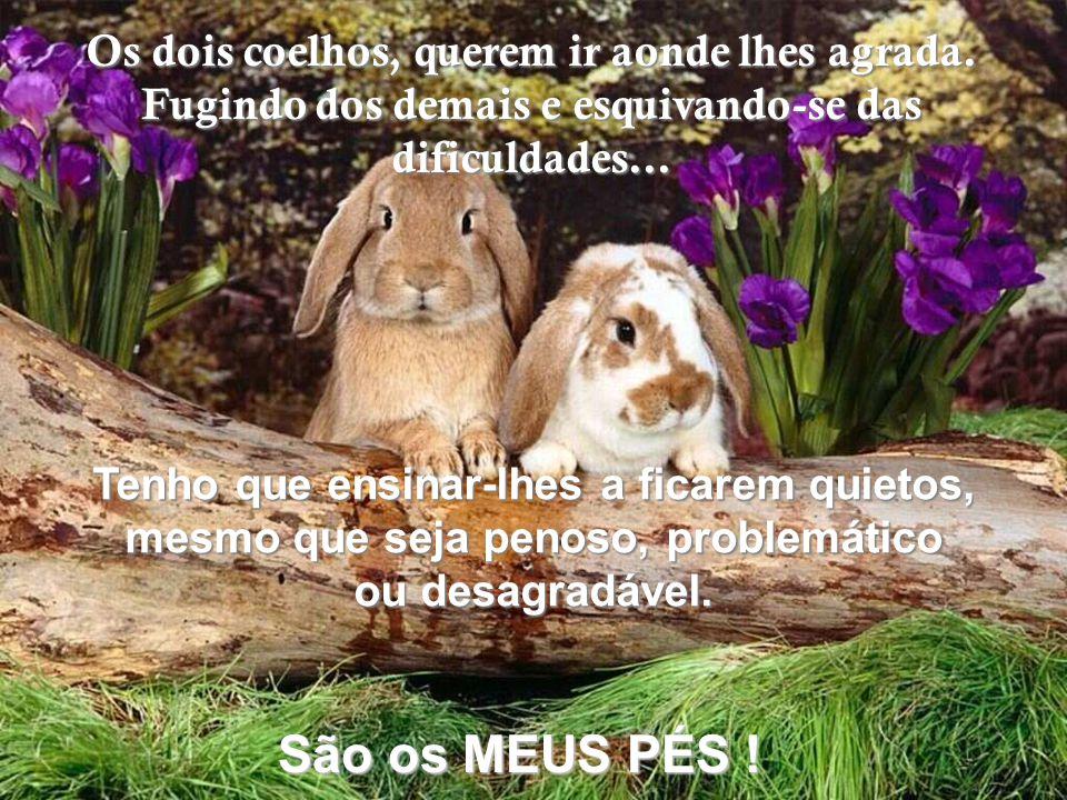 São os MEUS PÉS ! Os dois coelhos, querem ir aonde lhes agrada.