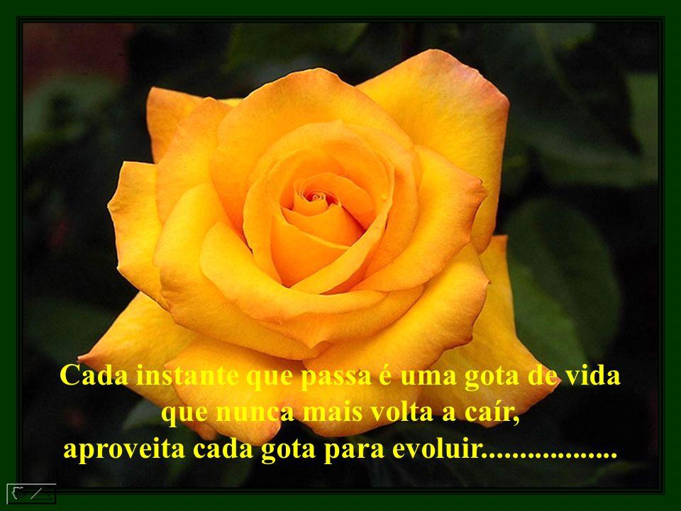 Cada instante que passa é uma gota de vida que nunca mais volta a caír, aproveita cada gota para evoluir..................