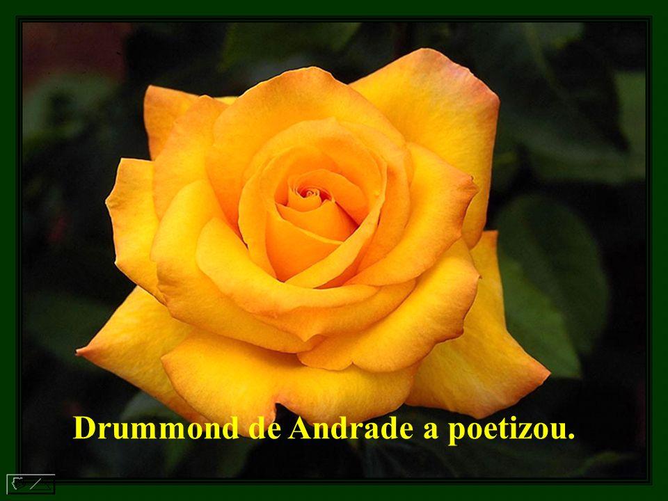 Drummond de Andrade a poetizou.