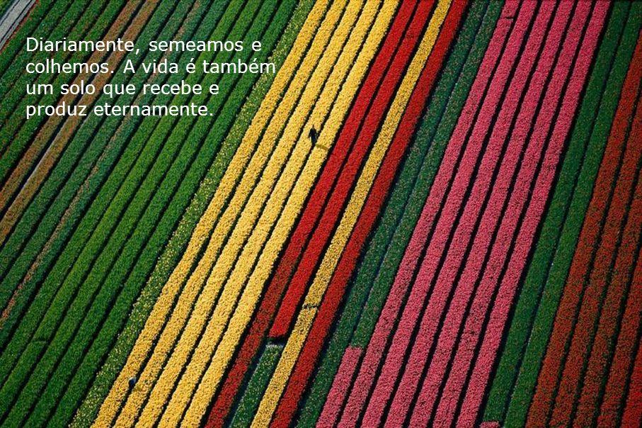 Diariamente, semeamos e