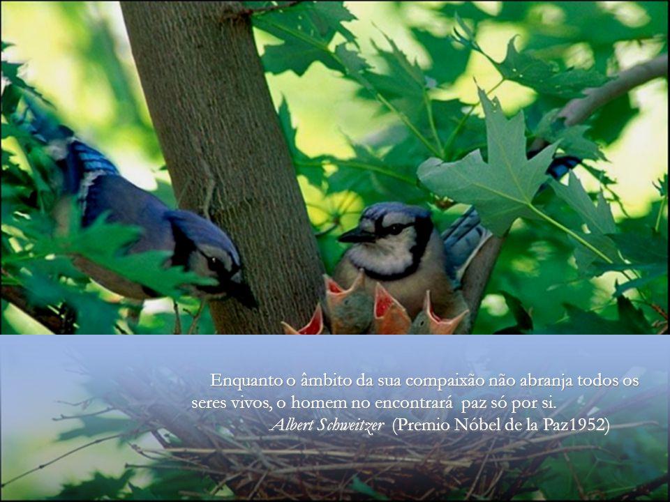 Enquanto o âmbito da sua compaixão não abranja todos os seres vivos, o homem no encontrará paz só por si.