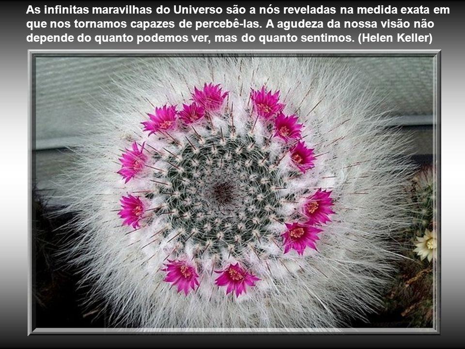 As infinitas maravilhas do Universo são a nós reveladas na medida exata em que nos tornamos capazes de percebê-las.