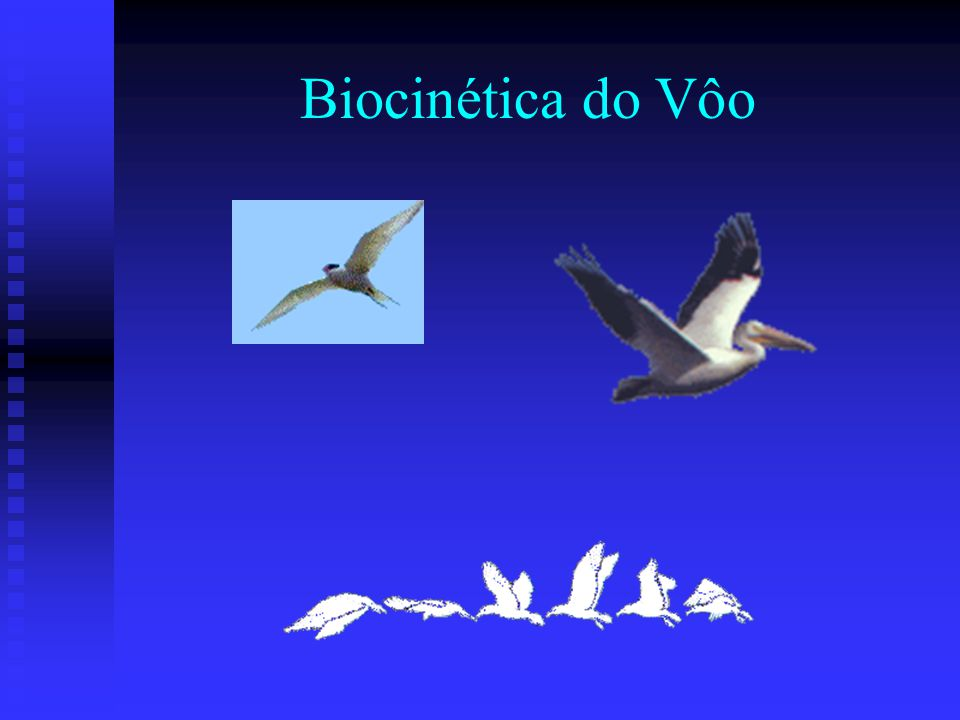 Biocinética do Vôo