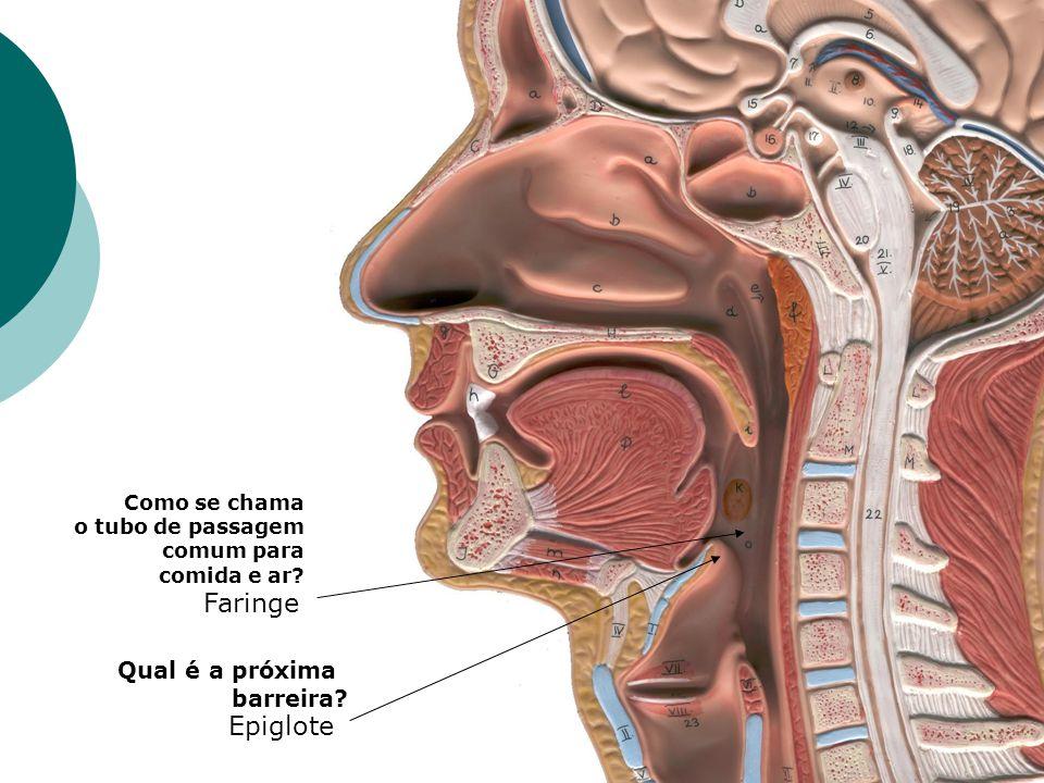 Faringe Epiglote Qual é a próxima barreira Como se chama
