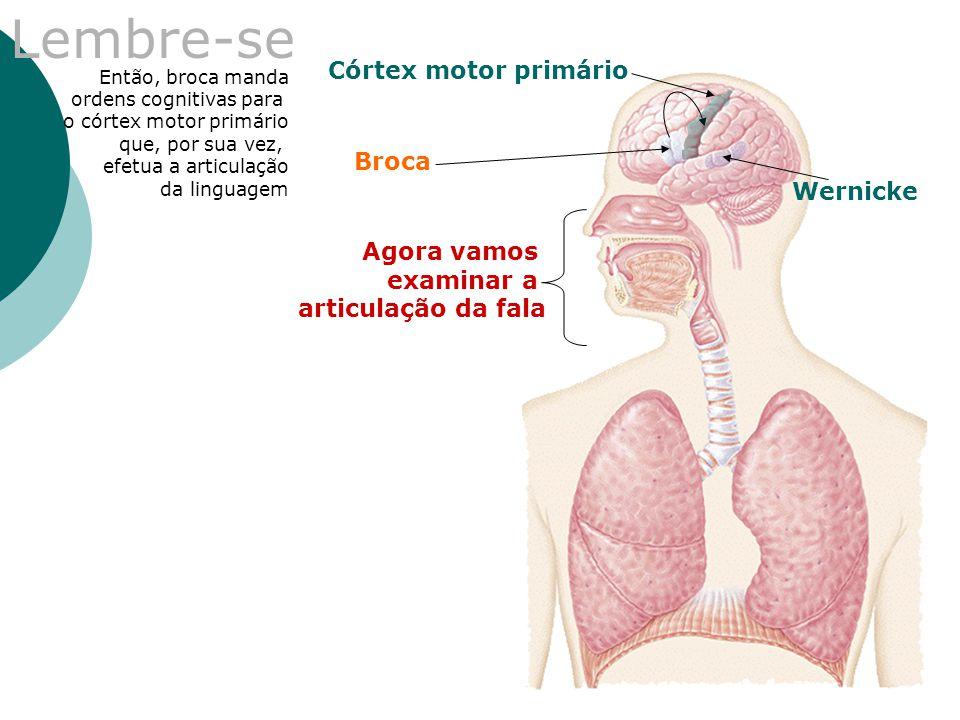 Lembre-se Córtex motor primário Broca Wernicke Agora vamos examinar a
