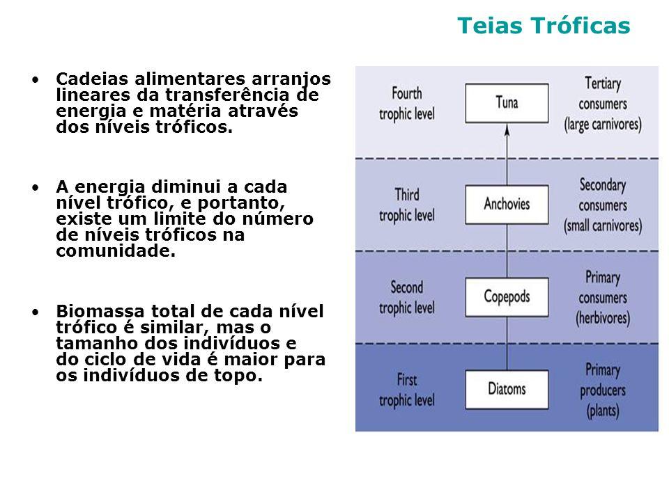 Teias Tróficas Cadeias alimentares arranjos lineares da transferência de energia e matéria através dos níveis tróficos.