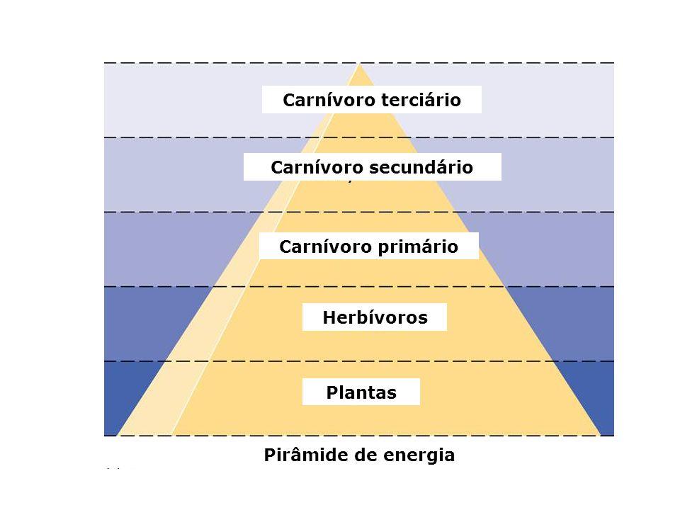 Carnívoro terciário Carnívoro secundário Carnívoro primário Herbívoros Plantas Pirâmide de energia