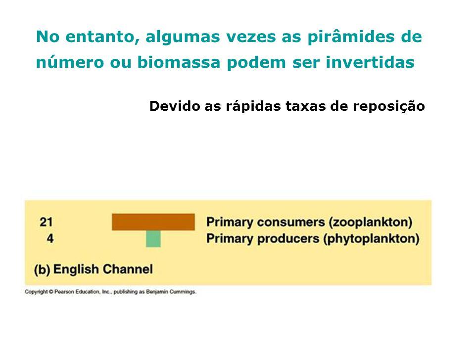 No entanto, algumas vezes as pirâmides de número ou biomassa podem ser invertidas