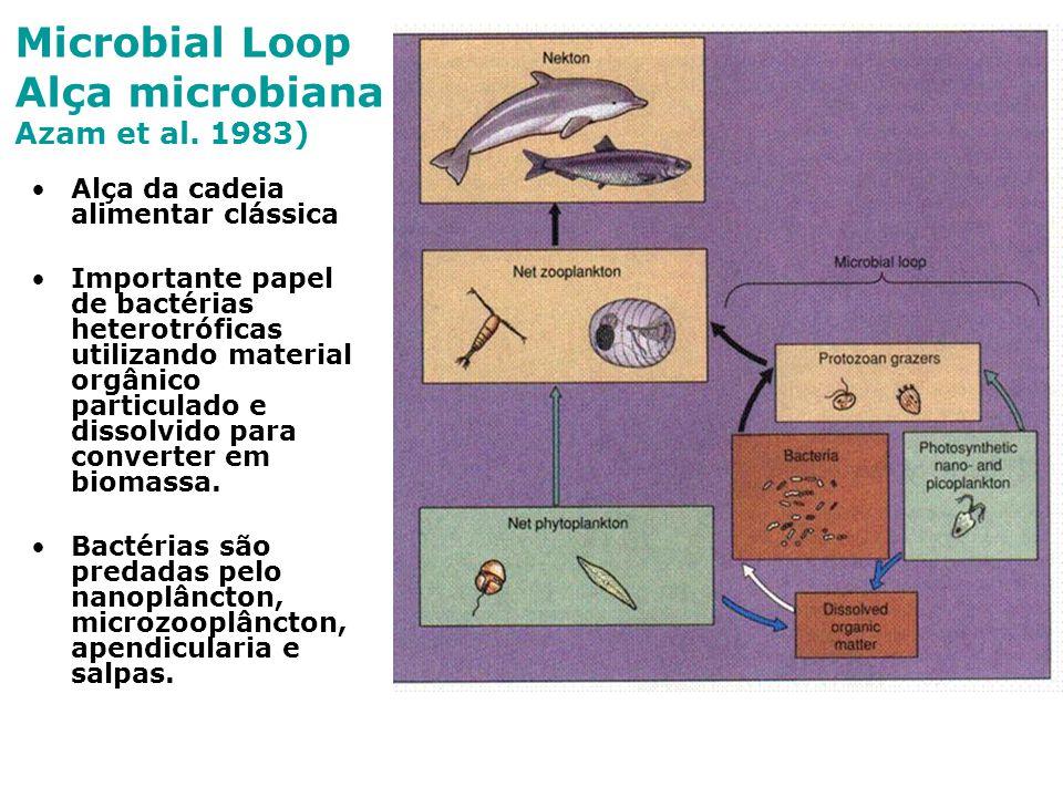 Microbial Loop Alça microbiana Azam et al. 1983)