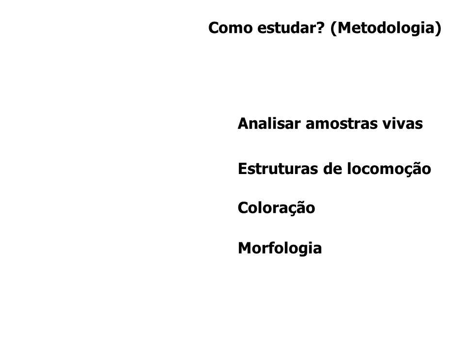 Como estudar (Metodologia)