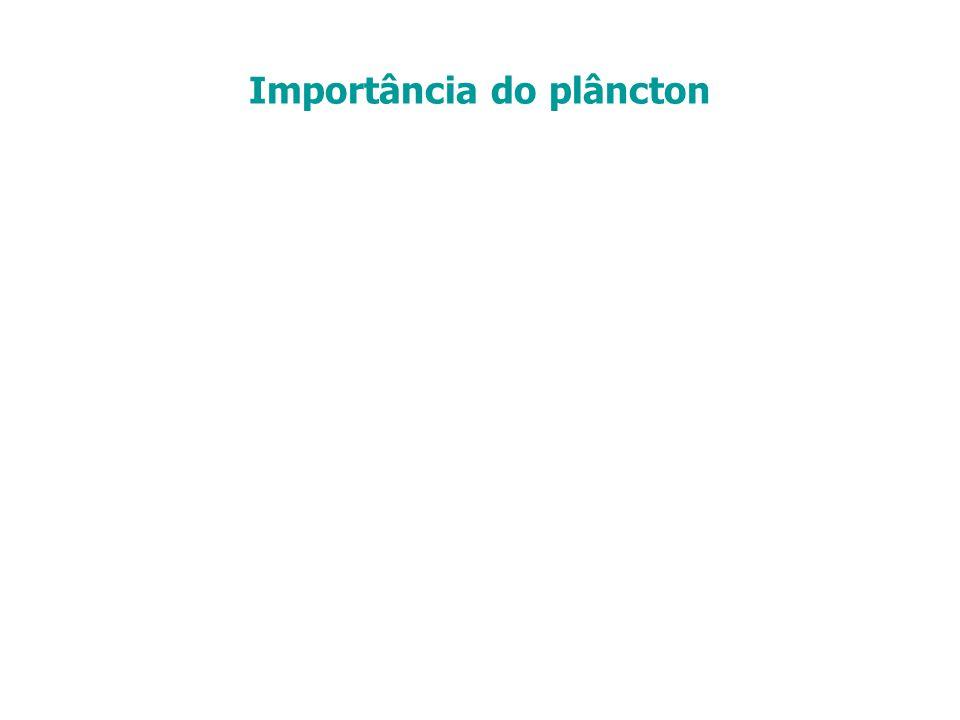 Importância do plâncton