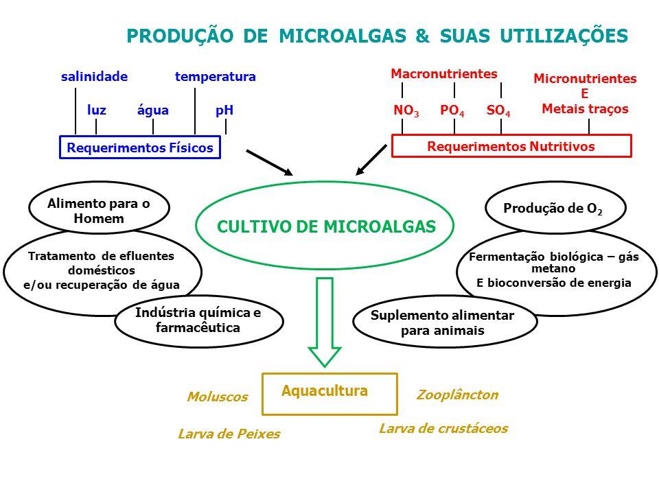 PRODUÇÃO DE MICROALGAS & SUAS UTILIZAÇÕES