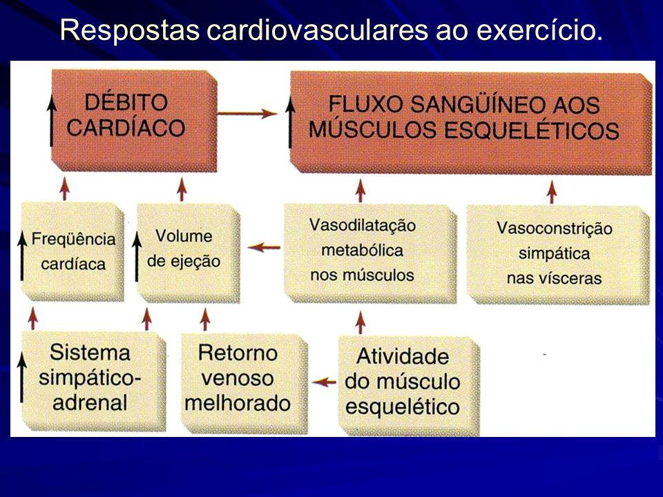 Respostas cardiovasculares ao exercício.