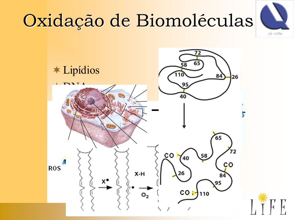 Oxidação de Biomoléculas