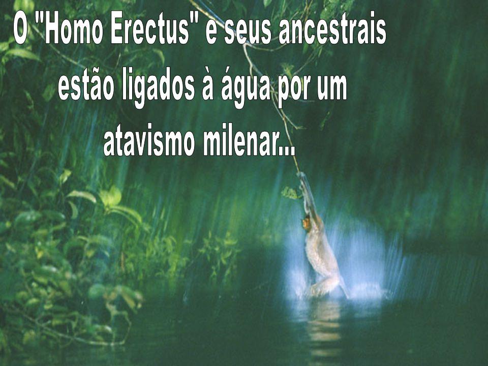 O Homo Erectus e seus ancestrais estão ligados à água por um