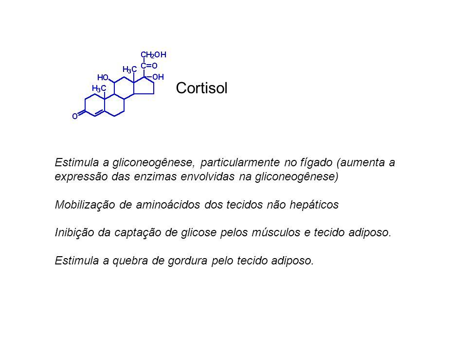 Cortisol Estimula a gliconeogênese, particularmente no fígado (aumenta a expressão das enzimas envolvidas na gliconeogênese)
