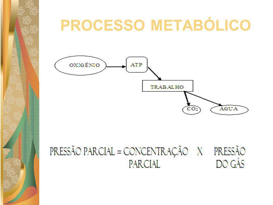 PROCESSO METABÓLICO