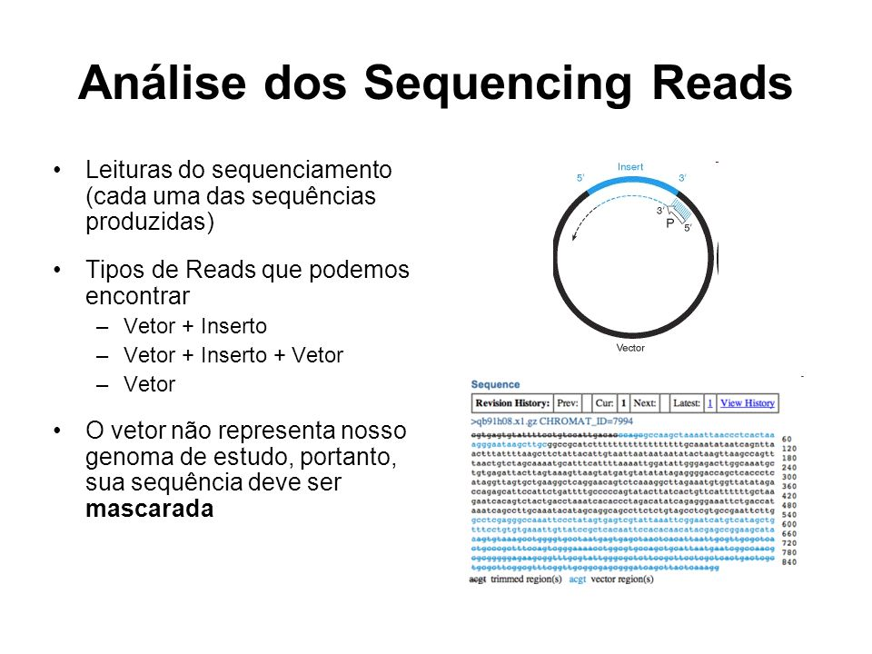 Análise dos Sequencing Reads