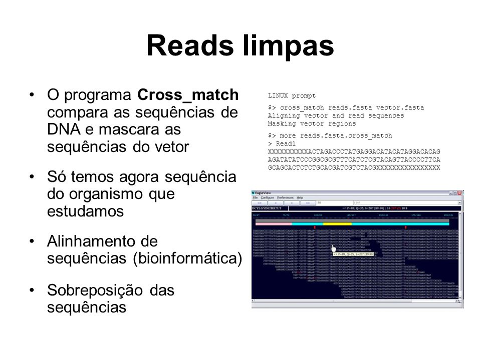 Reads limpas O programa Cross_match compara as sequências de DNA e mascara as sequências do vetor.