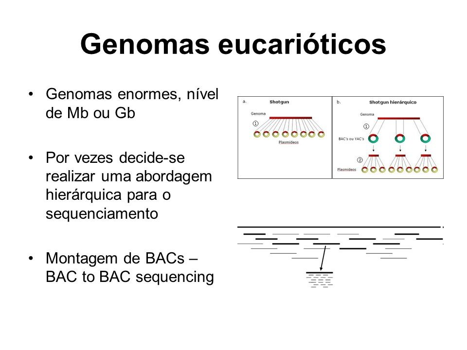Genomas eucarióticos Genomas enormes, nível de Mb ou Gb
