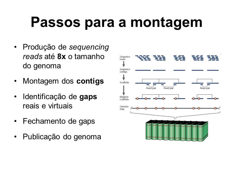 Passos para a montagem Produção de sequencing reads até 8x o tamanho do genoma. Montagem dos contigs.