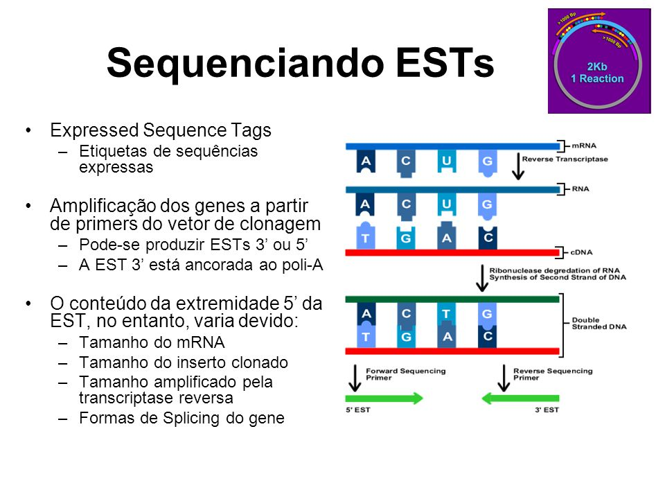 Sequenciando ESTs Expressed Sequence Tags