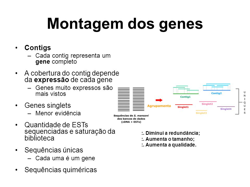 Montagem dos genes Contigs