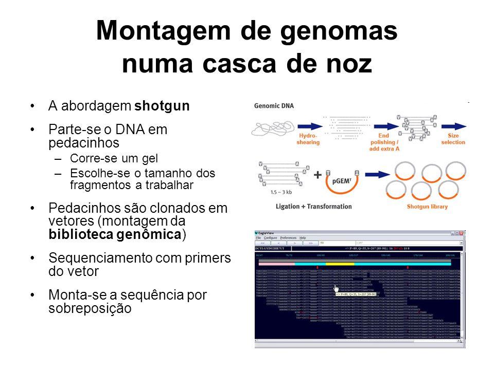 Montagem de genomas numa casca de noz