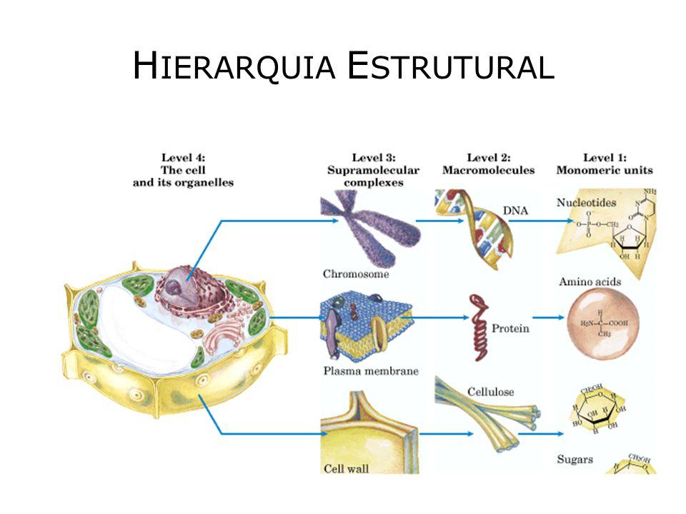 HIERARQUIA ESTRUTURAL