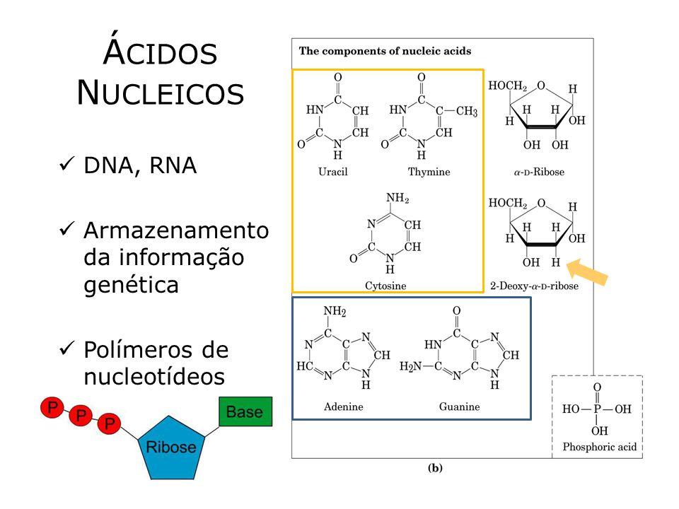 ÁCIDOS NUCLEICOS DNA, RNA Armazenamento da informação genética