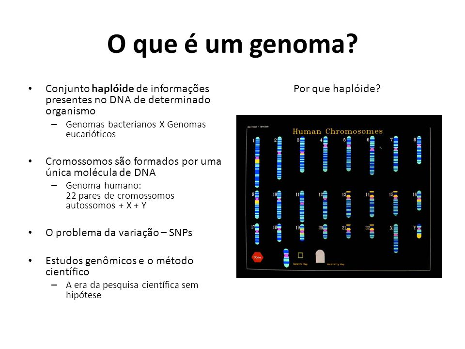O que é um genoma Por que haplóide