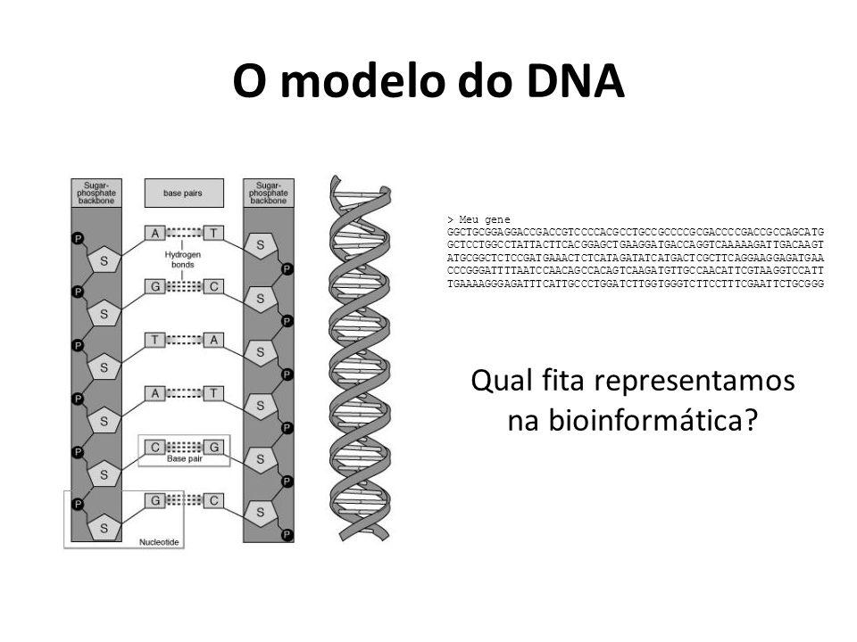 Qual fita representamos na bioinformática