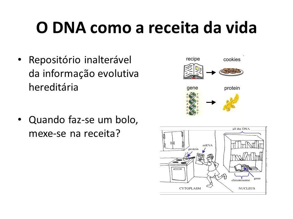 O DNA como a receita da vida