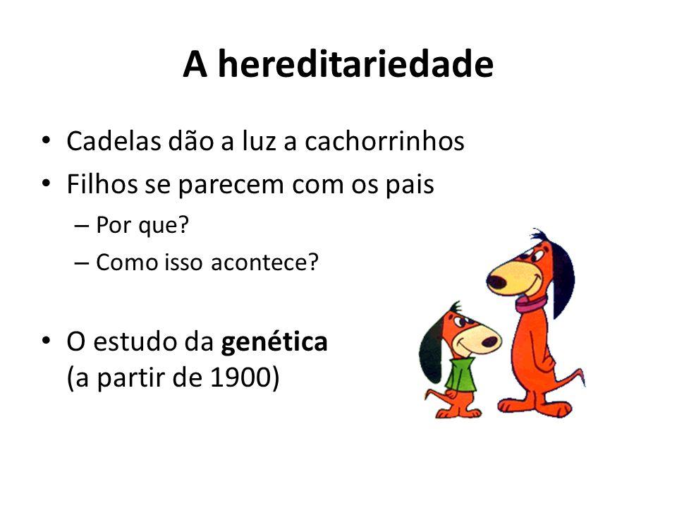 A hereditariedade Cadelas dão a luz a cachorrinhos