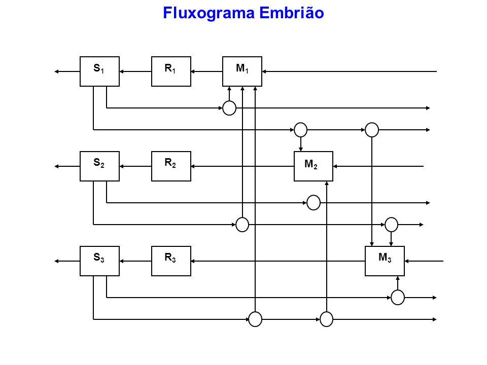 Fluxograma Embrião S1 R1 S2 R2 S3 R3 M3 M1 M2
