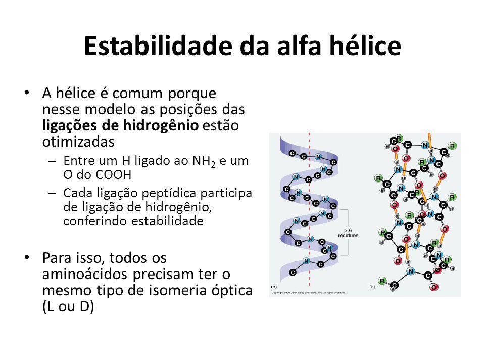 Estabilidade da alfa hélice