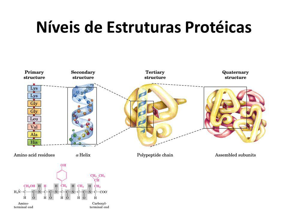 Níveis de Estruturas Protéicas